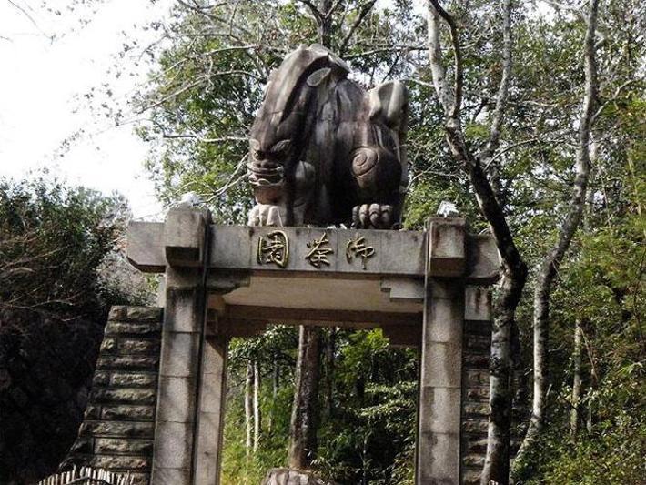A császári teakert a Wuyi hegyen